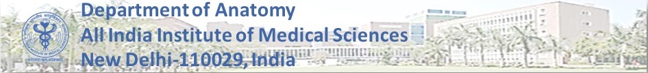 Department of Anatomy, AIIMS, New Delhi-110029, India